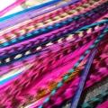 Clip Assortiment Divine 4 plumes L