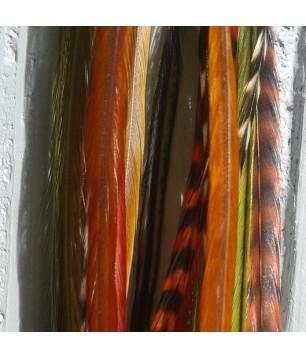 Assortiment Automne 5 plumes 20-25cm