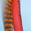 Clip nature jaune fluo XL 26