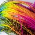 Duo Rainbow XL