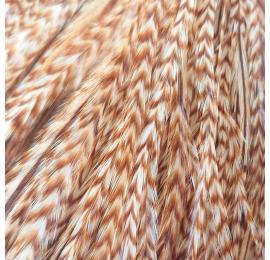Pluma rayada Ginger XXL