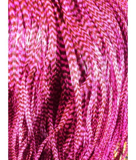 Pluma rayada rosada L