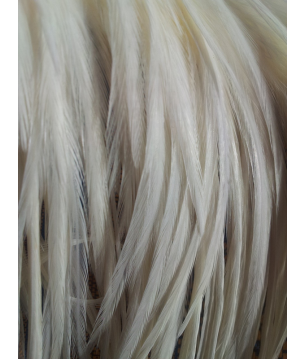 Plume unie blanches XL