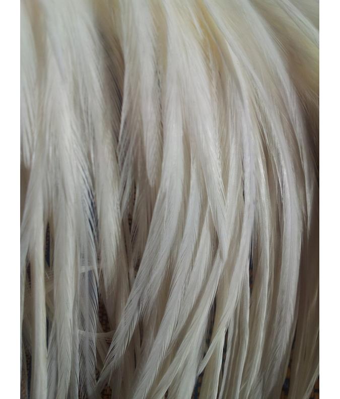 Pluma blanca XL