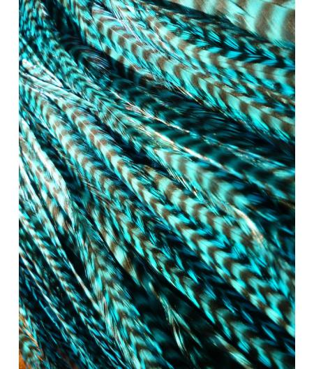 Turquoise rayée XL