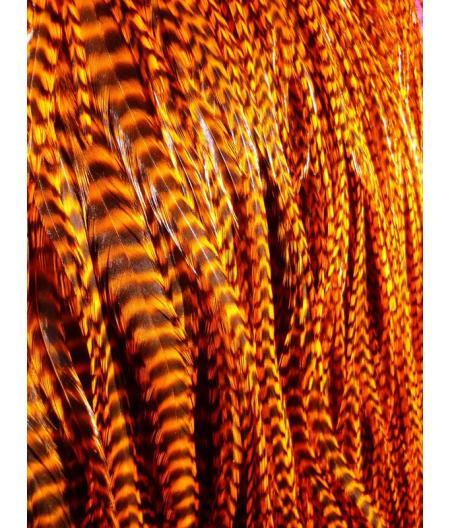Orange rayée XL