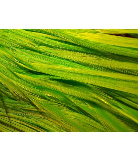 Unie vert fluo L