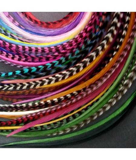Lot 50 plumes (20-24cm) L