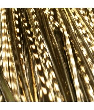 Pluma rayada hybrid oscura XL