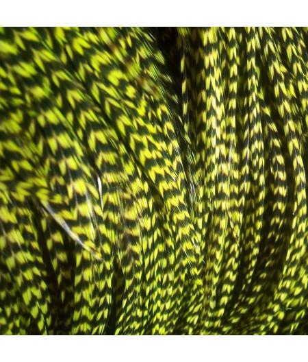Pluma rayada verde XL