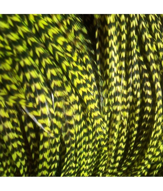 Verte lime rayée XL