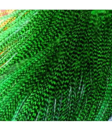 Pluma rayada verde L