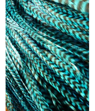 Turquoise rayée XXXL