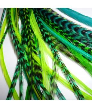 Assortiment Green Power 2 plumes et plus 20-25cm