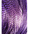 Pluma rayada violetta XL